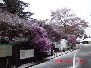 0413雪の中 (1).JPG