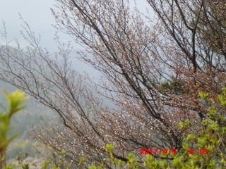 170409頂上山桜.JPG
